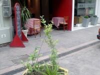 Lobby - Recepcion y Frente del hotel